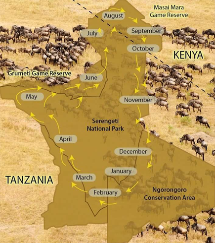 masai mara- serengeti wildebeest migration map.png