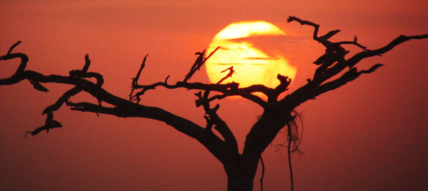a-day-on-african-safari - Capture Kenya