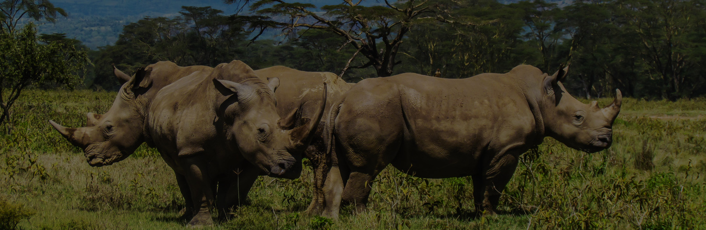 capture-kenya-tours-rhinos